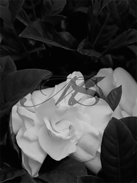 2016 Gardenia